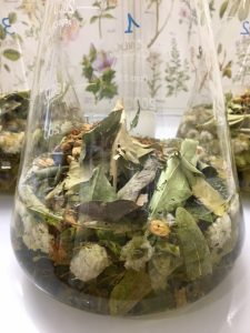 plantes médicinales en macération